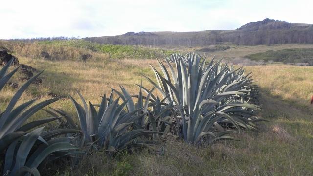 ile-de-paques-tdm-04_07_2013-178-640x360 dans Ile de Pâques (Chili)